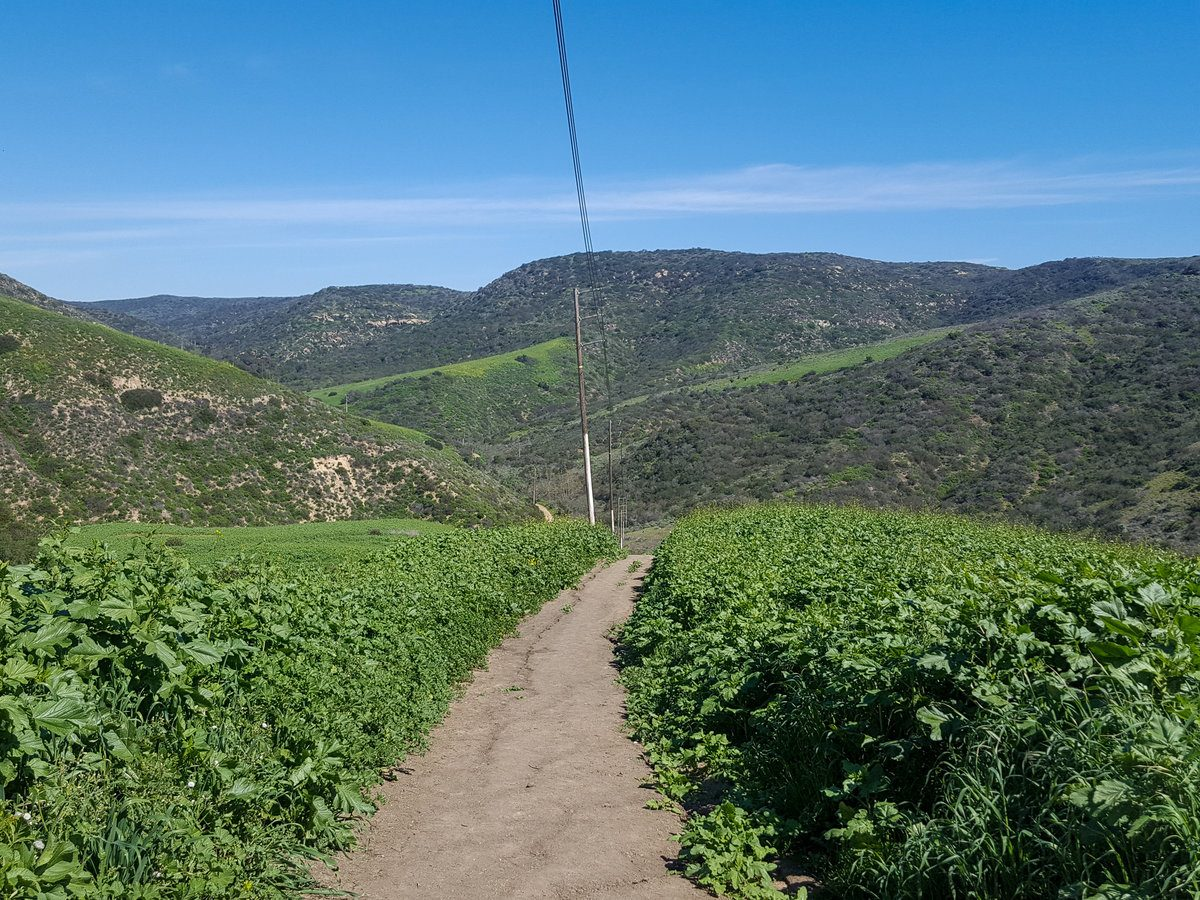 Hiking Trail in Crystal Cove State Park