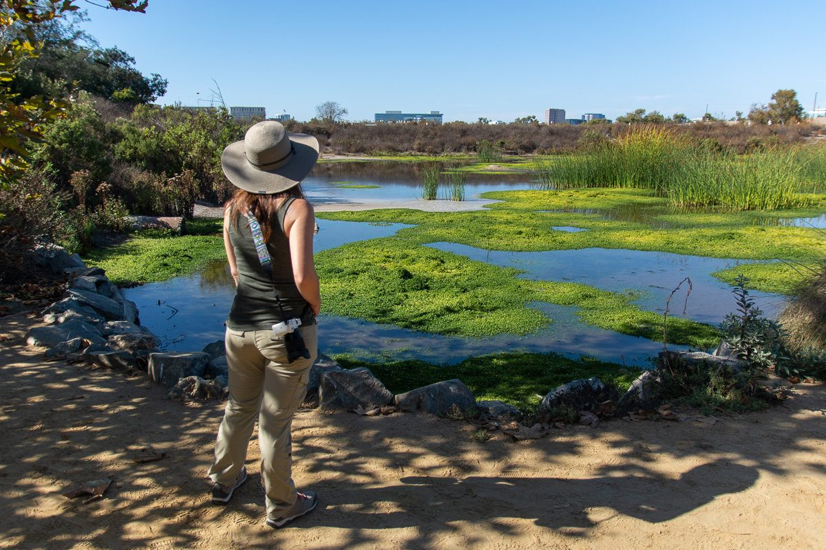 Marsh in the San Joaquin Wildlife Sanctuary