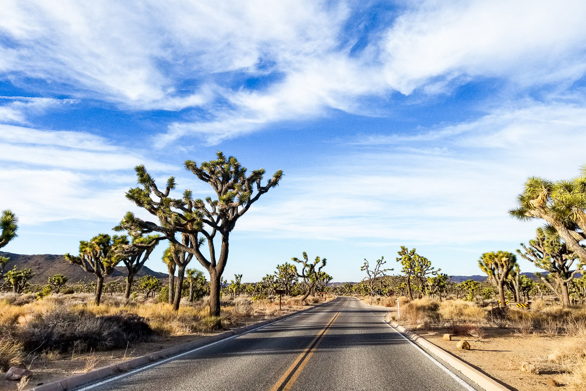 Driving through Joshua Tree National Park