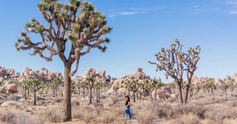 10 Tips for Visiting Joshua Tree National Park