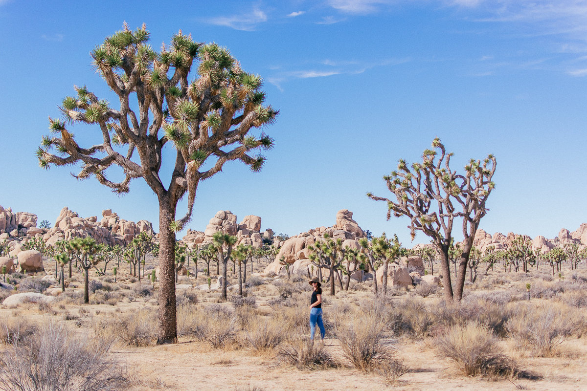 My 10 tips for your first visit to Joshua Tree National Park