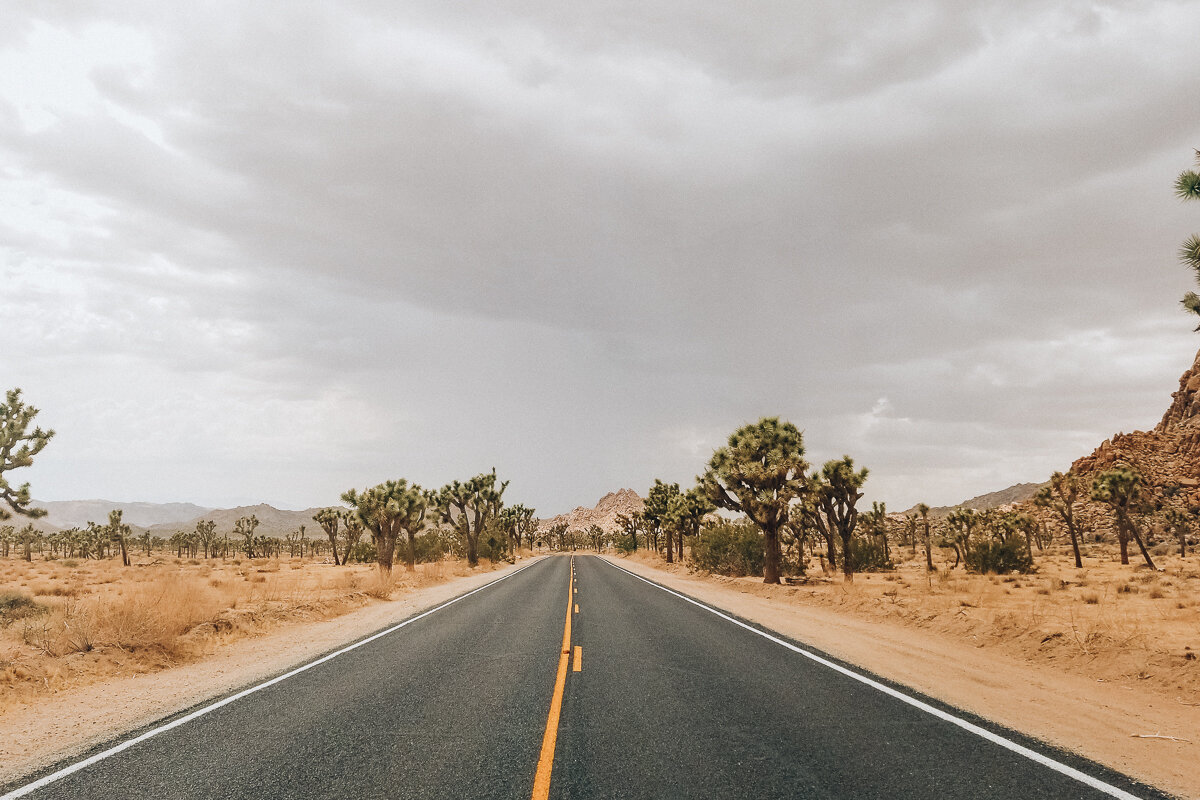 A road going through Joshua Tree National Park